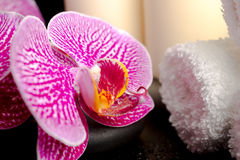 Spa setting of zen stones with drops, blooming twig of orchid Stock Image