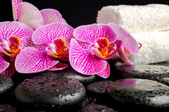 Spa setting of zen stones with drops, blooming twig Stock Images