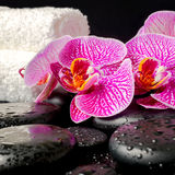 Spa setting of zen stones with drops, blooming twig Stock Photography
