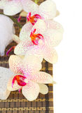 Spa settings with pink orchideas flowers Stock Images