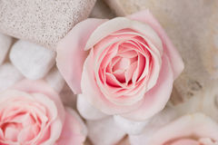 Spa settings with roses. Various items used in spa treatments on Royalty Free Stock Photos