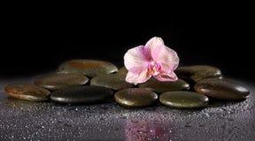 Spa stenar och orkidé med reflexion Fotografering för Bildbyråer