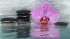 Spa stenar och orkidé som täckas med droppar, i vatten med dimma Arkivbilder