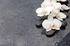Spa stenar och vit orkidé på grå bakgrund Arkivfoto