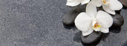 Spa stenar och vit orkidé på grå bakgrund Royaltyfri Fotografi