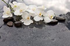 Spa stenar och vit orkidé på grå bakgrund Fotografering för Bildbyråer