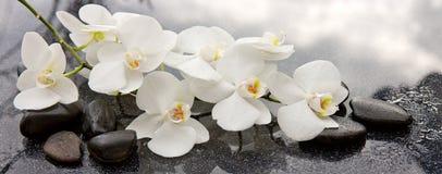 Spa stenar och vit orkidé på grå bakgrund Royaltyfria Bilder