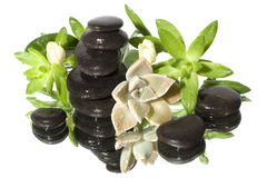 Spa still with black stones. Spa still life with black stones Royalty Free Stock Photos