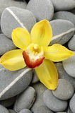 Spa still life. Yellow orchid flower on gray pebble Stock Image