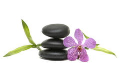Spa still life. Pink orchid and stones on the white background Stock Images