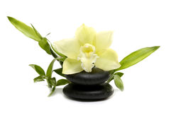 Spa still life. With white orchid flowers Royalty Free Stock Photo