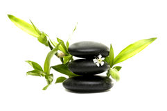 Spa still life. With white flowers with bamboo leaves Royalty Free Stock Image