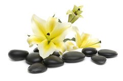 Spa still life. With madonna lily and spa stone Stock Photography