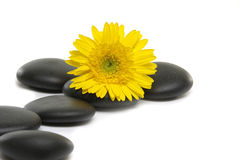 Spa still life. Beautiful Sunflower and stone on white Stock Photos