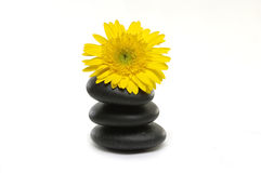Spa still life. Macro of yellow flower on stones on white Stock Photography