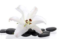 Spa still life. White lily with spa stone Stock Photography
