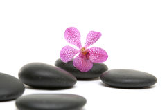 Spa still life. Macro of orchid and on black stones Stock Photo