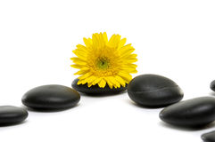 Spa still life. Sunflower and spa stones with yellow candle Stock Photos