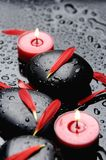Spa still life. Set of red flower plants on wet spa stones Stock Image