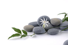 Spa still life. With frangipani and leafs Royalty Free Stock Image