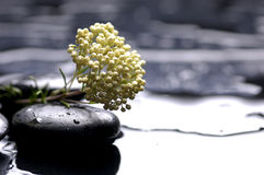 Spa still life Royalty Free Stock Images