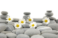 Spa Still life. Daisy flowers on black stone background showing health Stock Photography