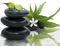 Free Spa Still Life Royalty Free Stock Image - 8120116