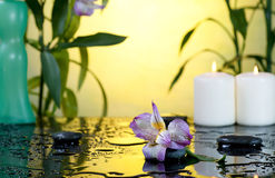 Spa still life with bamboo Stock Photography