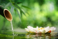 Spa. Still life with bamboo fountain and lotus Royalty Free Stock Photo
