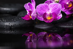 Spa still life of beautiful branches stripped lilac orchid Royalty Free Stock Images