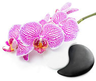 Spa still life of beautiful orchid flower and Yin-Yang Stock Photo