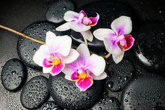 Spa still life of beautiful orchid (mini phalaenopsis) flower Royalty Free Stock Images