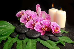 Spa still life of blooming twig of stripped violet orchid Royalty Free Stock Images