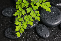 Spa still life with branch of fern and zen stones Royalty Free Stock Image