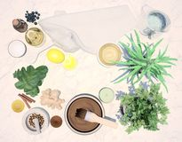 Spa still life with drug plants and cosmetic products on light gray background. Top view royalty free stock photo