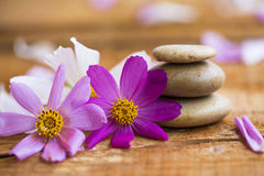 Spa still life with flowers and massage stones Royalty Free Stock Image