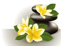 Spa still life with frangipani flower, vector illustration. Royalty Free Stock Photos