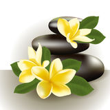 Spa still life with frangipani flower, vector illustration. Royalty Free Stock Image