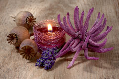 Spa still life with lavender and anemone Stock Photography