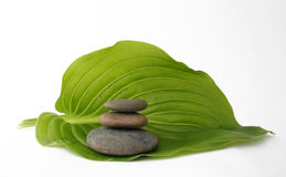 Spa still life on leaf. Spa still life.It Is Insulated on white Royalty Free Stock Images