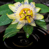 Spa still life of passiflora flower, green leaf with drop, towel Stock Photography