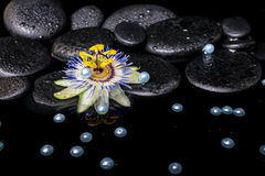 Spa still life of passiflora flower on zen basalt stones with dr Royalty Free Stock Photo