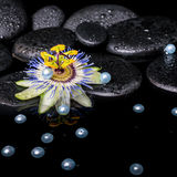 Spa still life of passiflora flower on zen basalt stones with dr Stock Image