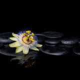 Spa still life of passiflora flower on zen stones with reflectio Stock Images