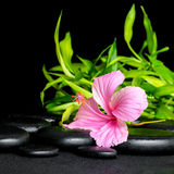 Spa still life of pink hibiscus flower and twigs bamboo on zen b Royalty Free Stock Photography