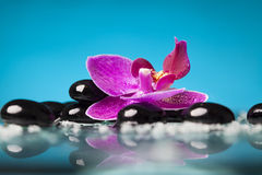 Spa still life with pink orchid and black zen stone Royalty Free Stock Image