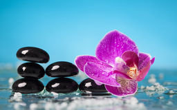 Spa still life with pink orchid and black zen stone Royalty Free Stock Photo