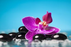 Spa still life with pink orchid and black zen stones Stock Photography
