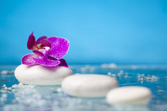 Spa still life with pink orchid and white zen stone in a serenit Royalty Free Stock Photos