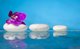 Spa still life with pink orchid and white zen stone in a serenit Stock Photography